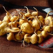 Maca – The Peruvian Root for Energy and Athletic Performance